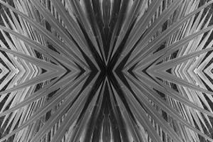 symmetry-alexa-nelipa