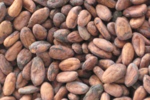 organic_cacao_beans_nibs_seeds_from_owned[1]